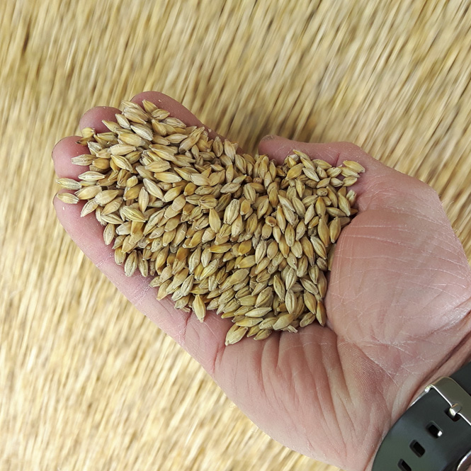 seed processing